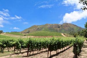 Zuid-Afrikaanse wijnen